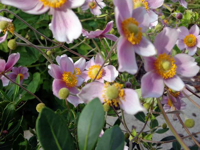 Washinton D.C. Botanischer Garten