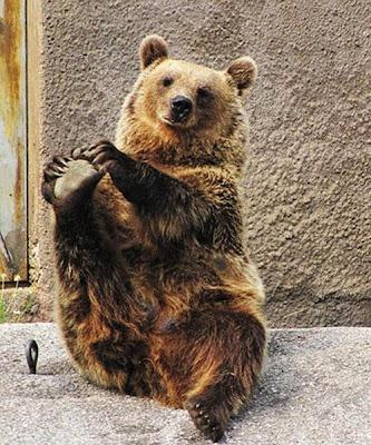 beruang santra6