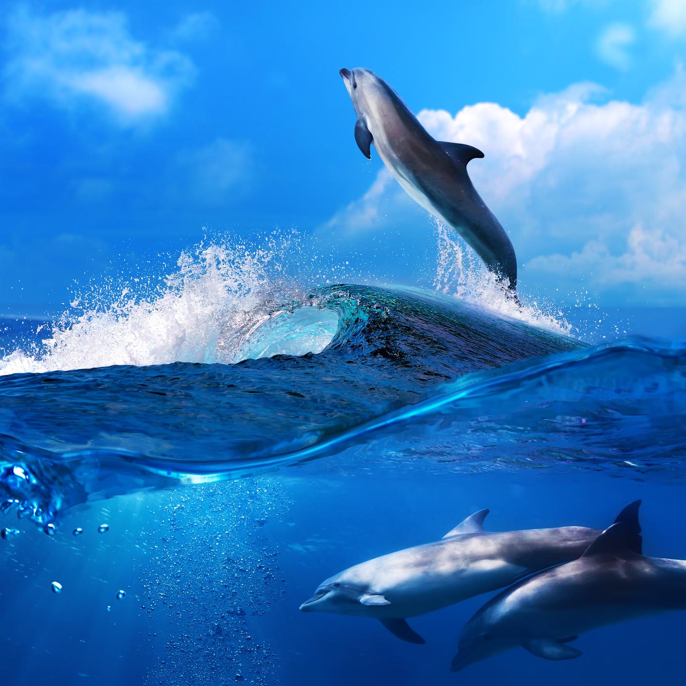 Фото красивые под водой