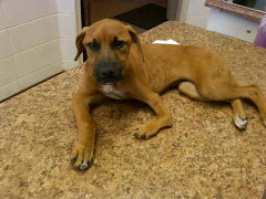 9/15/11 Sina At Vet's Office. This is from Carpathia Paws Rescue