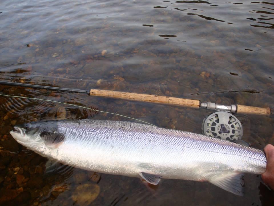 Salmon fly summer atlantic salmon fishing in scotland for Atlantic salmon fishing