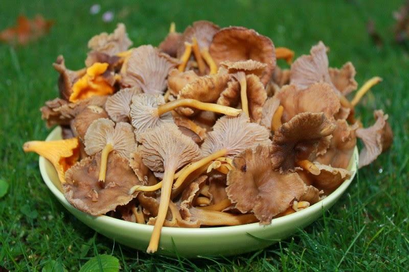 Cena 16 ottobre 2014, pane e funghi!!