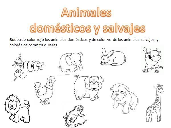 Animales domesticos para niños de preescolar para colorear ...
