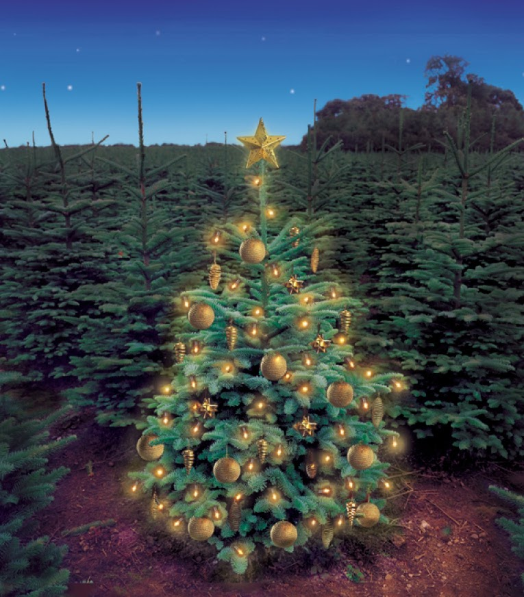 The Old Saw Christmas Traditions Symbolism Religious Tolerance