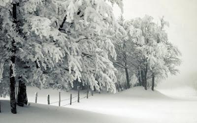 A Snowy Christmas scene