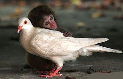 Khỉ con dễ thương, khỉ con đáng yêu, khỉ con