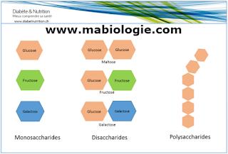 la biochimie structurale,Définition et Catégorie