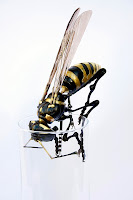 Edouard-Martinet-Bugs-Insect