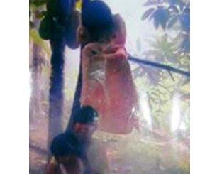 Foto Kuntilanak Tertangkap Kamera di Pohon Nangka | Liv