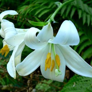 şifalı bitkiler kalp yetmezliği kesik ve yaralar sivilce akne ve cilt bakımı