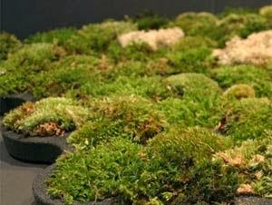 Tapetes diferentes e ecológico de banheiro