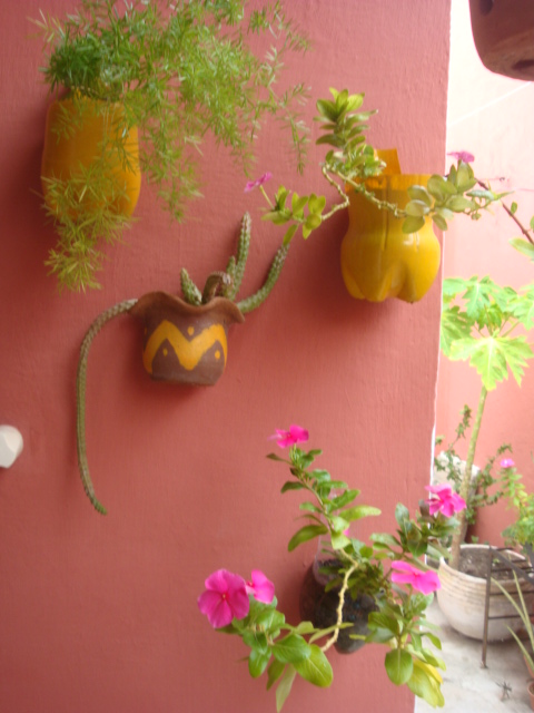 meu quintal meu jardim : meu quintal meu jardim: Cactos E Suculentas Meu Jardim Quintal