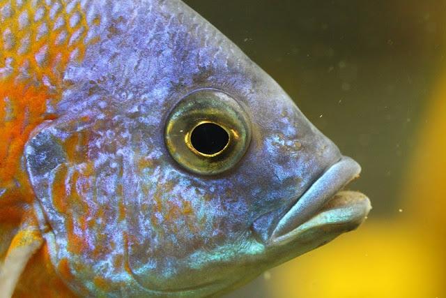 Tierfotos - Tierbilder - Fische - Fischfotos