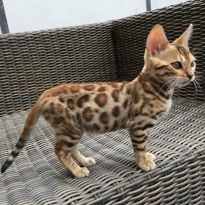 Leopard? Cat?