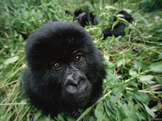 ملف كامل عن اجمل واروع الصور للحيوانات  المفترسة   حيوانات الغابة  15