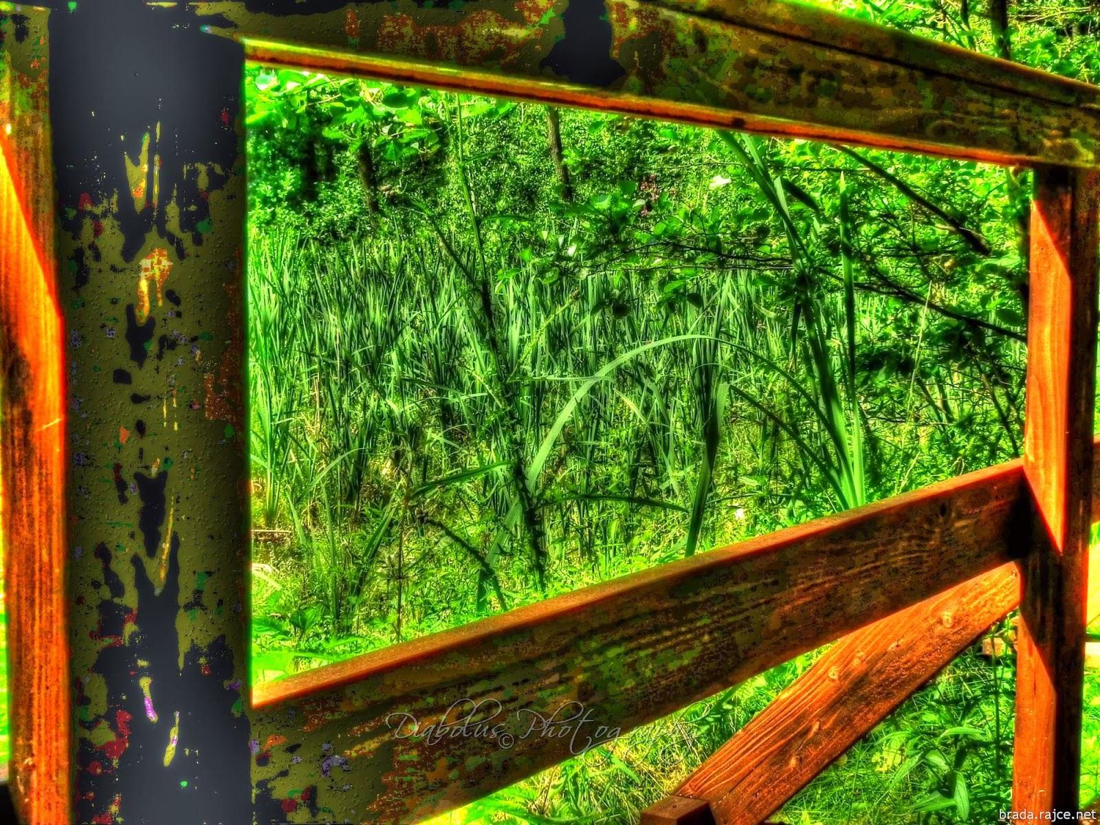 Vyschlý rybník - Cvikov