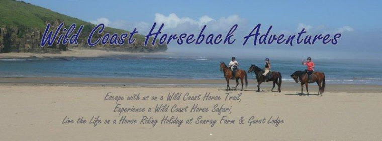 Horse Riding Holidays, beach trails, horseback safaris and adventures