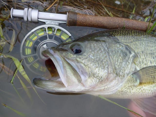 Related Pic Lovely Catfish Shocker Fish Caller Cat Stunner Gizmo Finder.