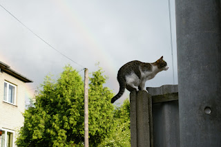 mysz ale kot kot na płocie