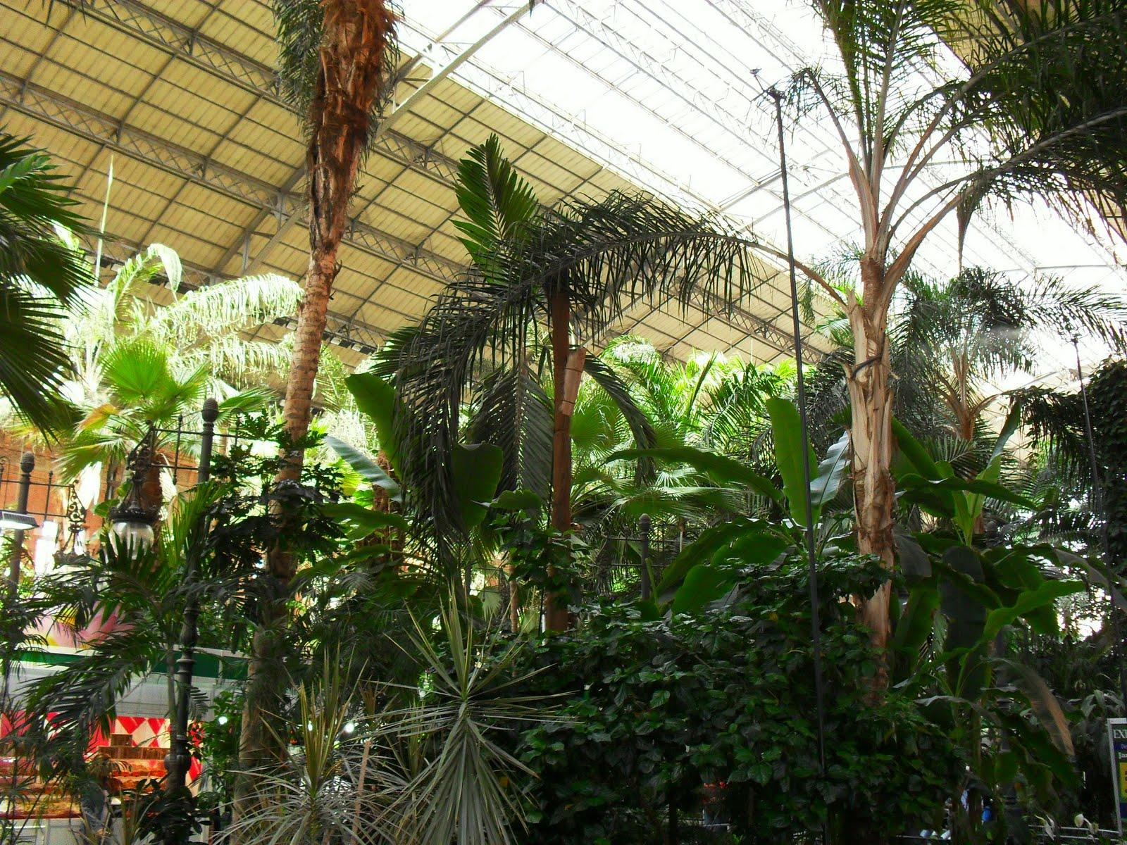 Arte y jardiner a jard n tropical estaci n de atocha - Jardin tropical atocha ...