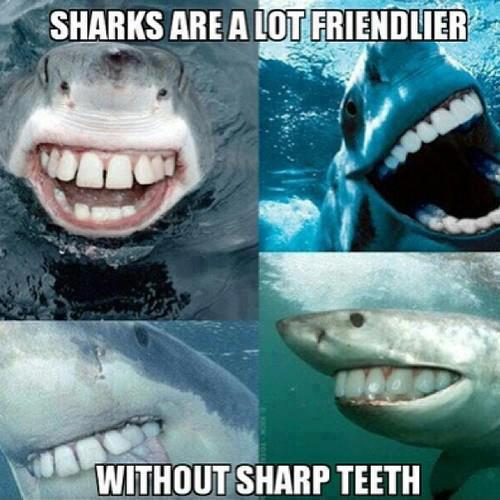 Sharks Are A Lot Friendlier