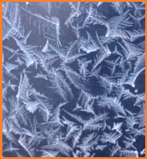 a closeup of several long lines of feathered ice crystals