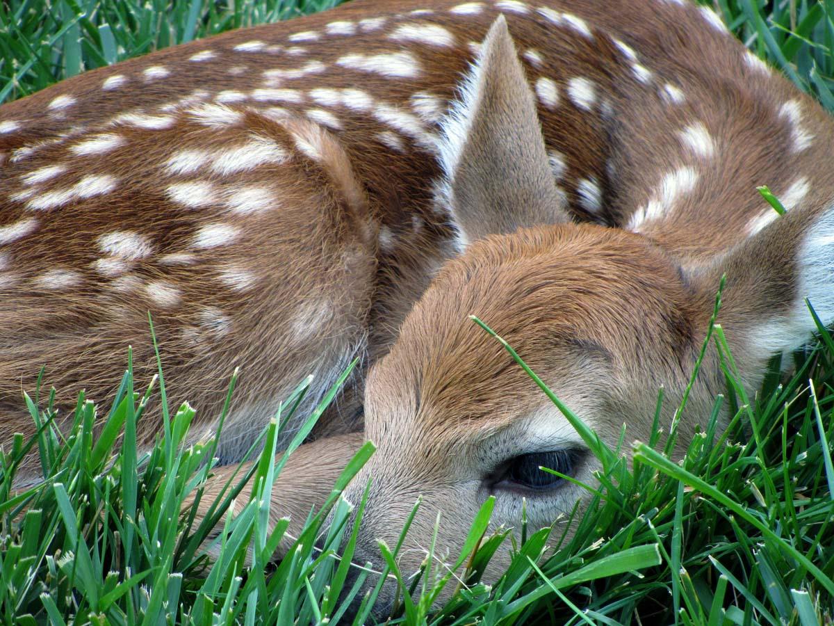 John and Sigrid's Adventures: Baby Deer - 2012