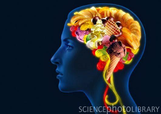 el cerebro no necesita alimentos dulces para obtener glucosa