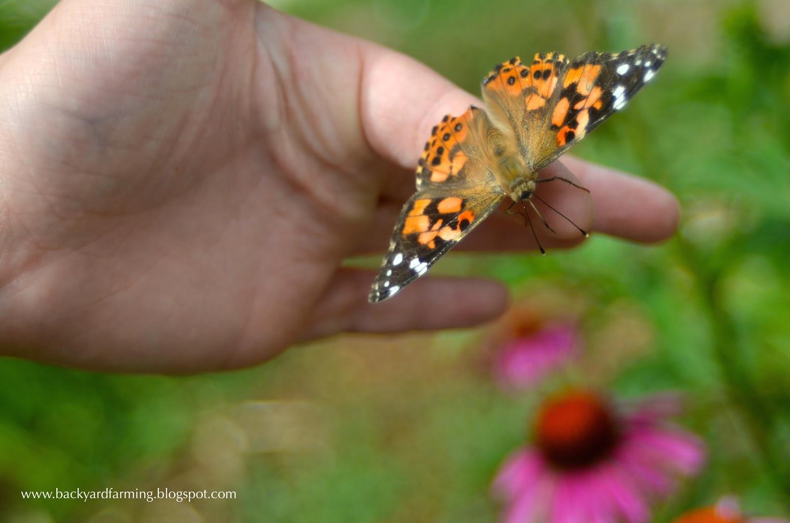 4 magníficas plantas que son perfectos para atraer mariposas, aves y abejas