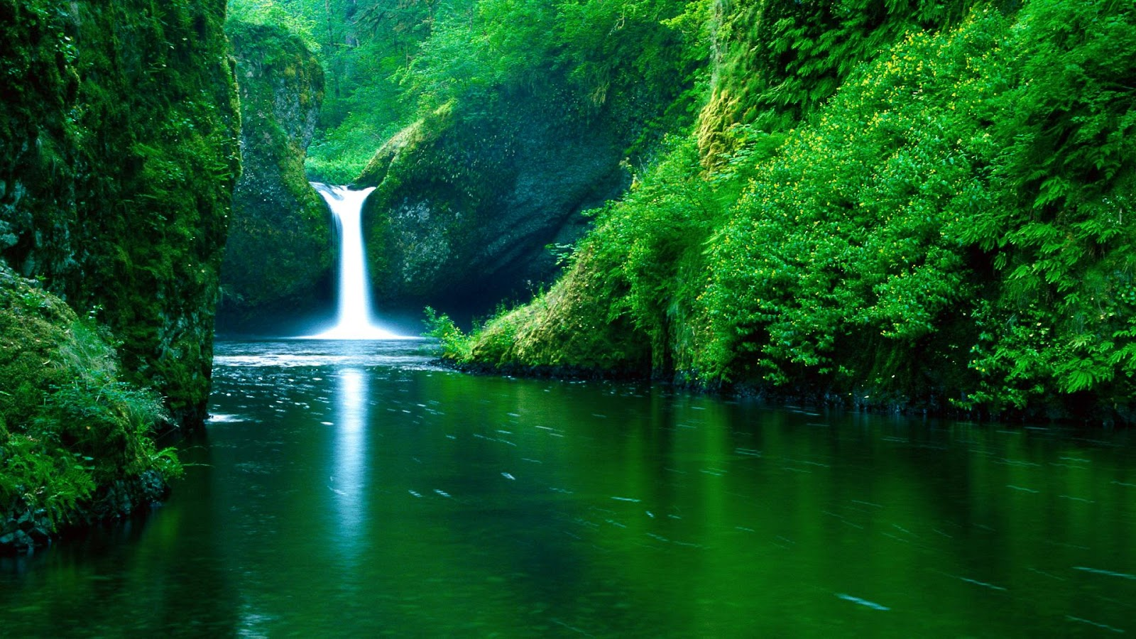 Green Forest Full HD Waterfall Nature Wallpapers for Laptop Desktop