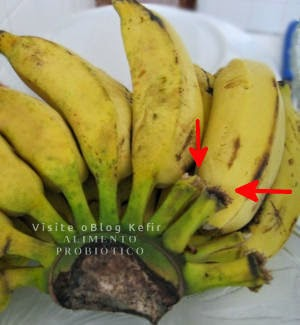Como eliminar a mosca de frutas. separe as bananas verdes uma-a-uma.