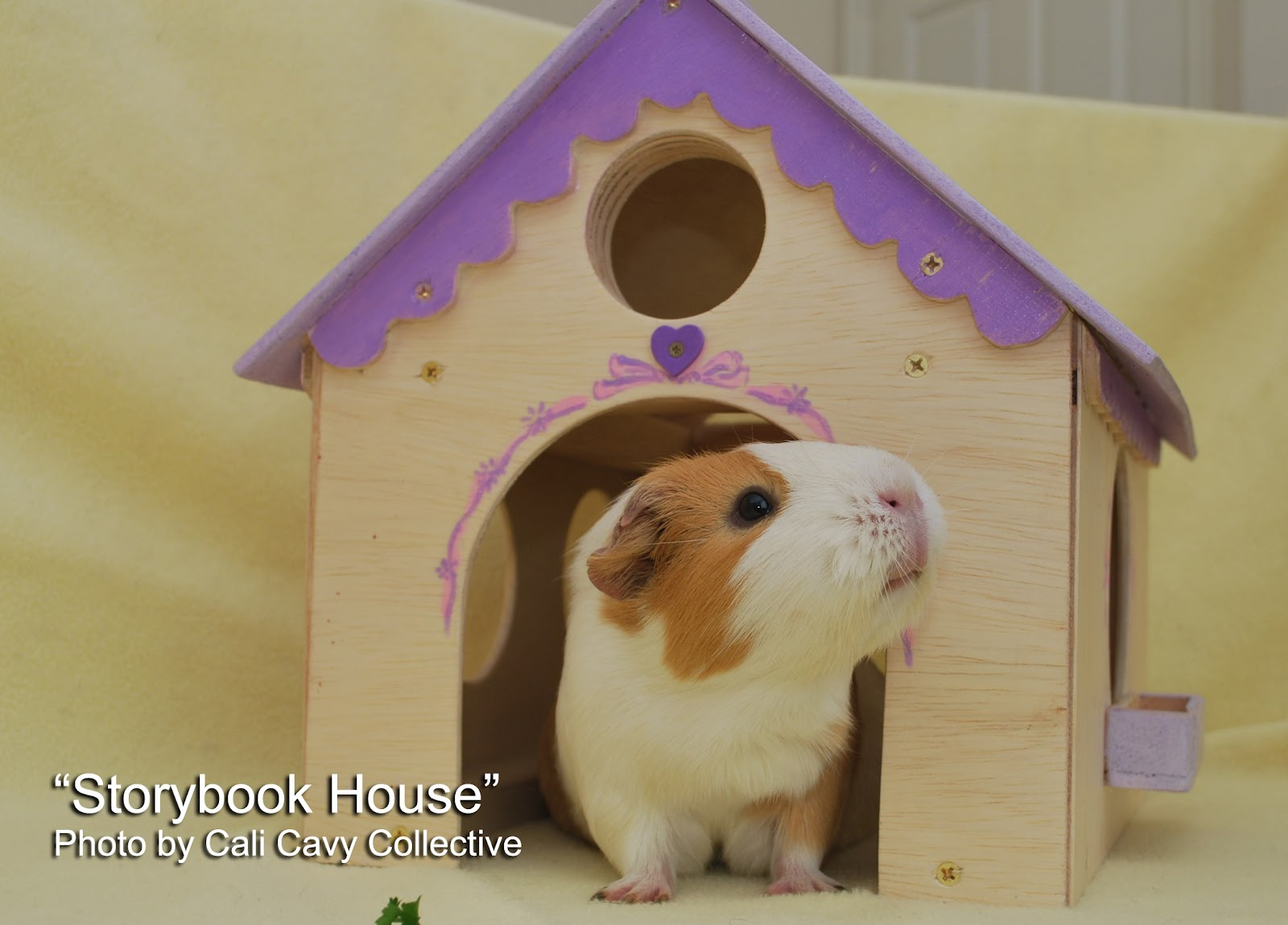 Cali cavy collective a blog about all things guinea pig for How to build a guinea pig house