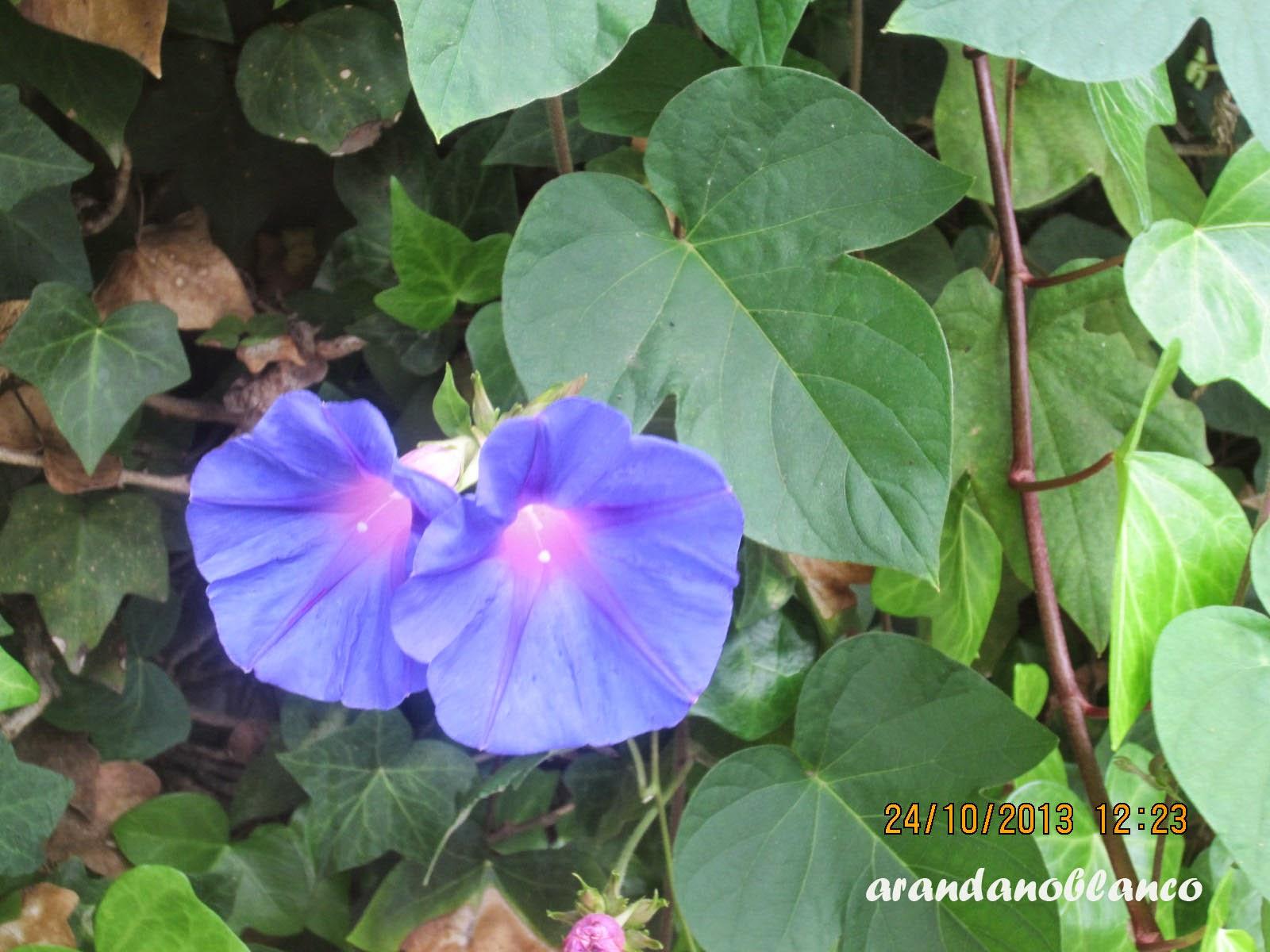arbustosensevilla-encinarosa: octubre 2014
