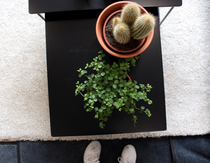 Kukat ja kaktukset