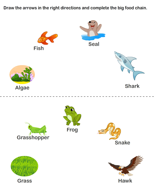graphic relating to Food Chain Printable called Little ones Web page: Animal Food items Chain Daily life Cycle Printable Biology