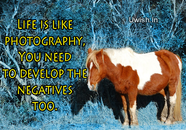 Motivational & Inspirational quotes with horses e greeting cards and wishes