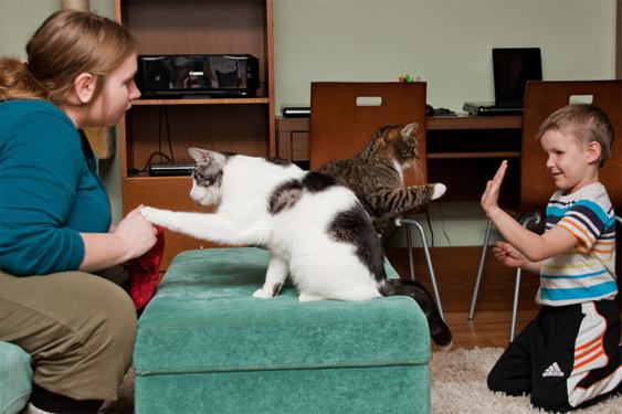 Kissan motivointi ja motivaation ylläpito ovat onnistuneen temppukoulutuksen avainasioita.