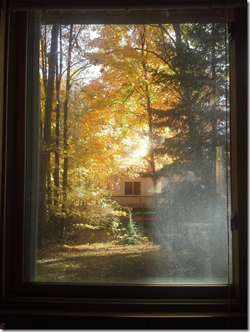 Fall window 1