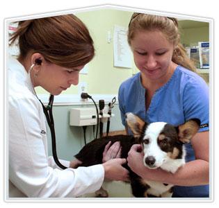 Gyvūno klinikinis tyrimas