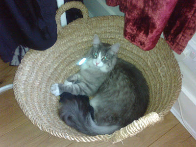 Blue Cat in a basket