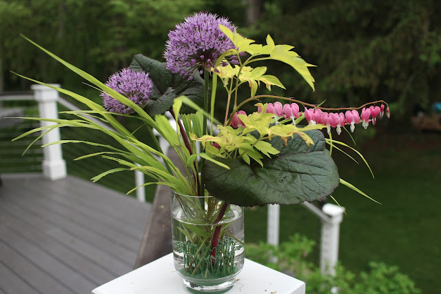 The Impatient Gardener Garden Appreciation Week 5 (Ligularia, Hakonechloa, bleeding heart, allium)