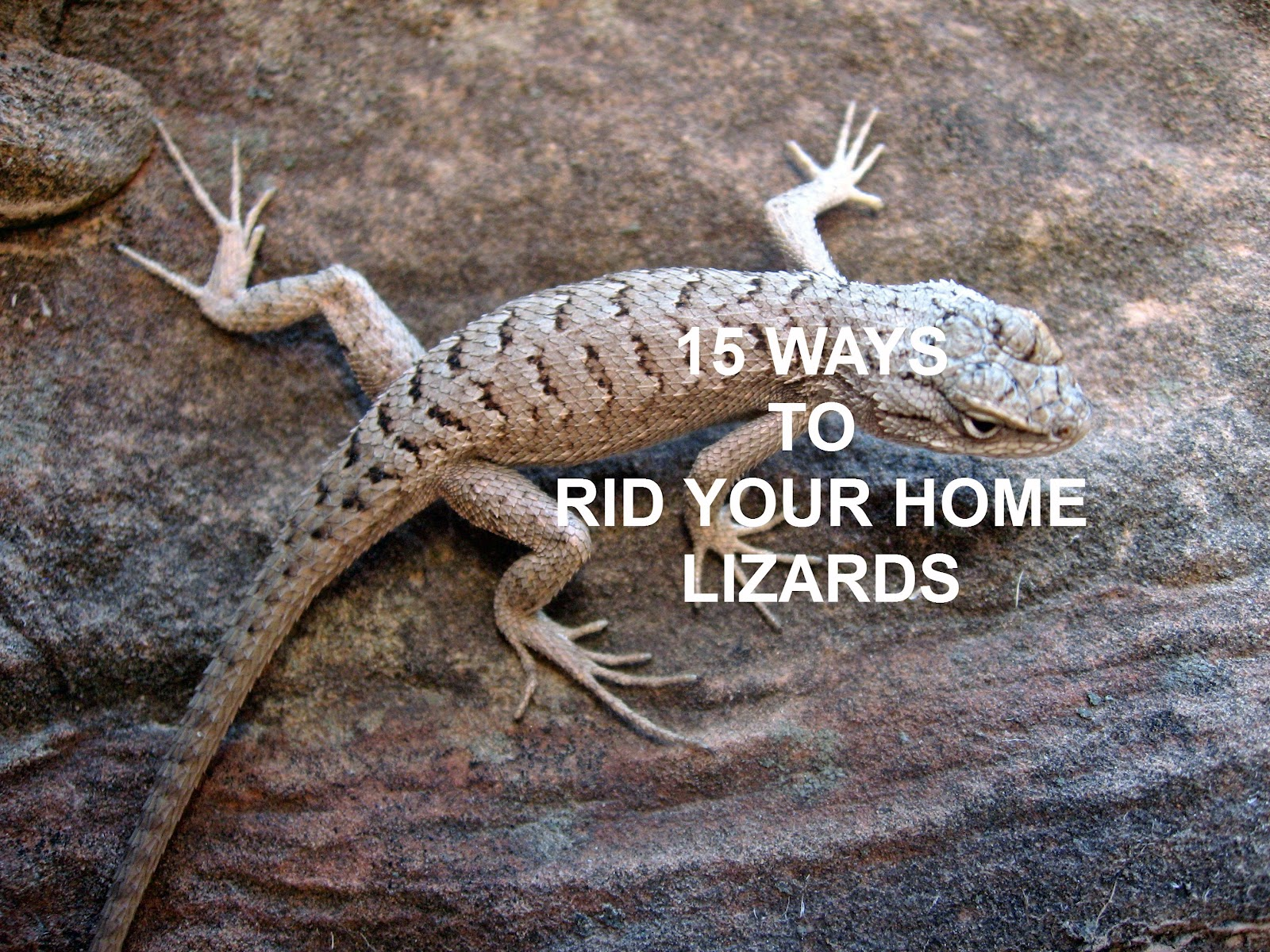 the nifty thrifty family 15 ways to rid your home of lizards