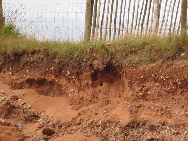 Bee-eater nest - Cumbria