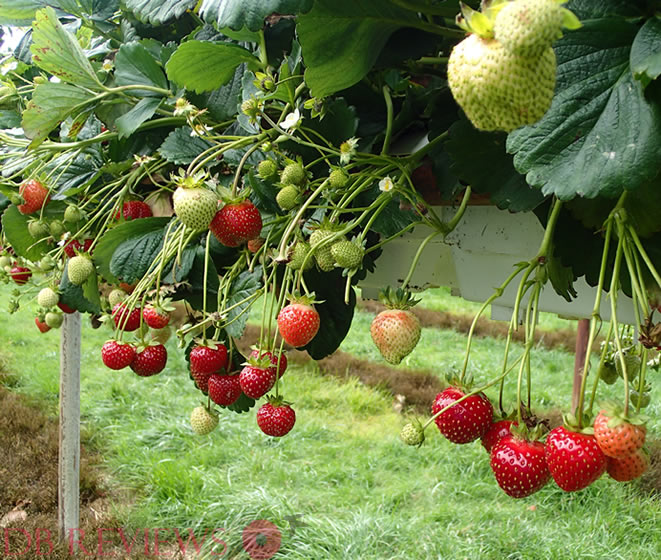 Pick Your Own Fruits and Vegetables at Parkside Farm