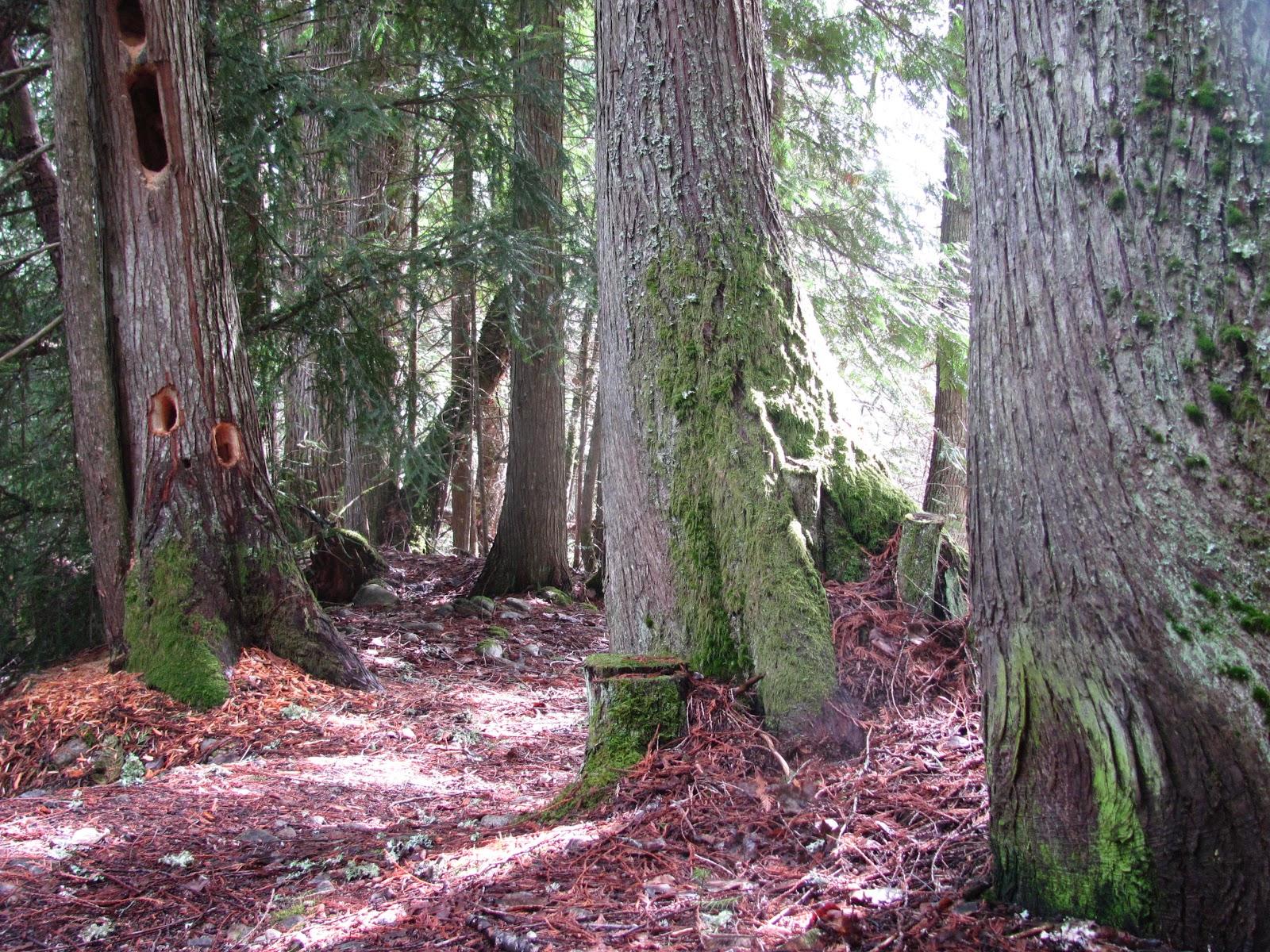 our forest backyard ginger moss u0026 nettles