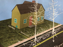 Street Tree Roots & Gas Pipelines RMA Graphic
