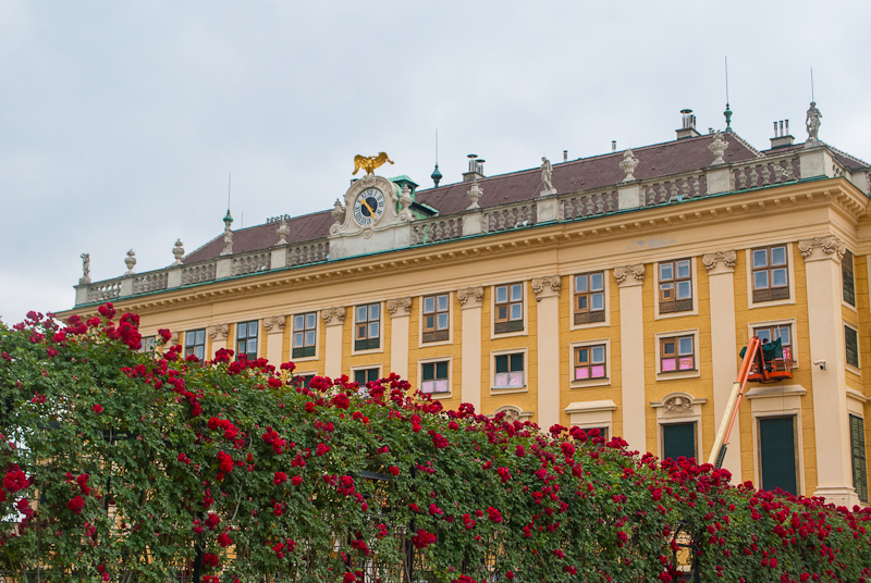 Rose garden and Schönbrunn Palace in Vienna, Austria