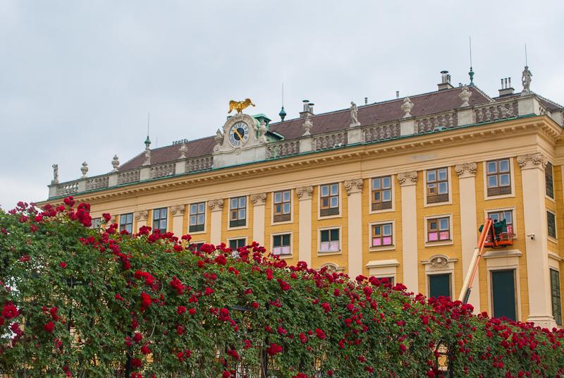 Rose garden and Schönbrunn Palace in Vienna, Austria