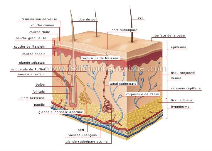Les taches de pigment sur le corps que sont dangereuses