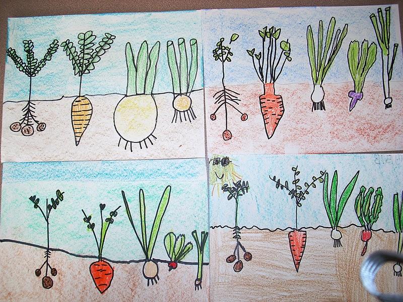 A sembrar sopa de verduras  Growing Vegetable Soup